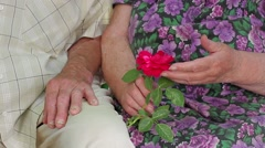 Grandmother admires and caress a rose. Old hands of elderly people. - stock footage