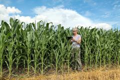 Agriculture, farmer or agronomist in corn field - stock photo