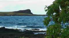 Shot of the Hawaiian shoreline with volcanic rock and a tree in the foreground. Stock Footage