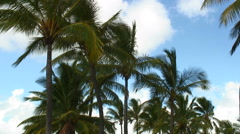 Group of palm trees swaying in the wind in Hawaii. Stock Footage