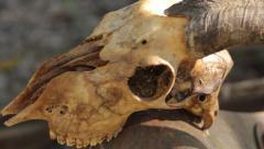 Goat Head Voodoo Skull Stock Footage