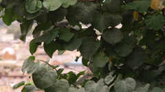 Trees in the foreground in Rome Italy. Stock Footage