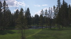 Silhouetted trees in a meadow in Yellowstone. Stock Footage
