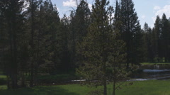 Silhouette of trees in Yellowstone. Stock Footage