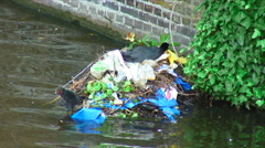 Bird in a nest made of twigs and garbage on a river. Stock Footage
