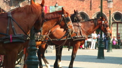Horses tethered to carriages. Stock Footage