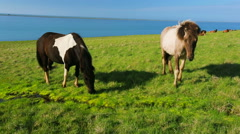 Wild horses on rural pasture land by the blue sea - stock footage