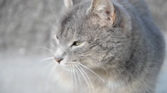 Small gray brown cat on the sidewalk on the road Stock Footage