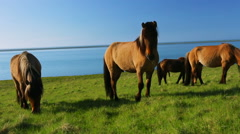 Wild horses on rural pasture land by the blue sea Stock Footage