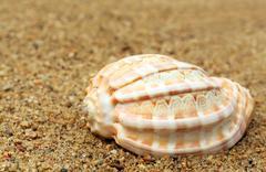 Snail shell in a sea beach Stock Photos