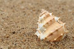 Snail shell in a sea beach Stock Photos