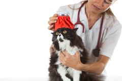 Cat flu Stock Photos