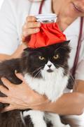 Cat flu - stock photo