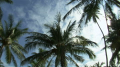 Wide angle lens panning down palm trees against a blue sky. - stock footage