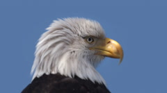 The head of an American Bald Eagle. Stock Footage