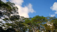 Time-lapse of windy green tree tops and clouds. Stock Footage