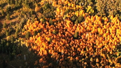 Aerial shot of fall trees and mountains in Utah. Stock Footage