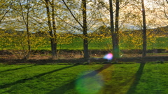 Time-lapse panning shot of poplar trees with lens flare in Utah Stock Footage