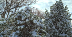 Timelapse of Snow Melting on Trees Stock Footage