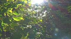 Ambient summer sunlight green leaves 1 Stock Footage