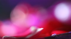 Stock Video Footage of Valentine's Day rose petals