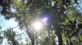 Natural energy. Environmental Rainforest. Steady cam. Sun Bleeds Through Trees Footage
