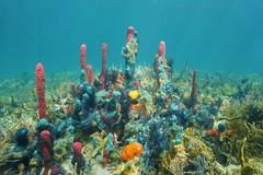 Colorful underwater marine life on the seabed Stock Photos