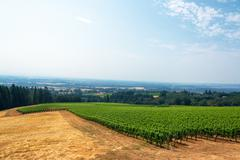 Vineyard and Willamette Valley - stock photo