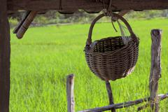 Wicker basket in rice fields Stock Photos