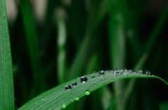 Many drops of rain fall on a leaf Stock Photos