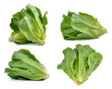Cos Lettuce on White Background - stock photo