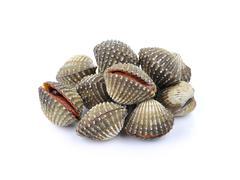 Fresh Clam shellfish food - stock photo