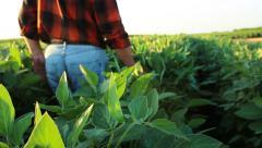 Senior farmer in a field examining crop Stock Footage
