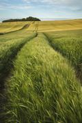 Summer landscape over agricultural farm field of crops in late afternoon Stock Photos