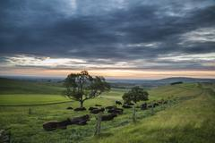 Beautiful Summer sunset landscape Steyning Bowl on South Downs Stock Photos