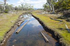 Floating timber logs on river Tasmania Stock Photos