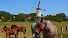 Horses In Front Of Windmill - Netherlands Stock Footage