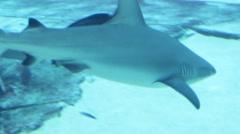 Shark swimming near the bottom tame - stock footage