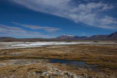 Wetland on the Altiplano - stock photo