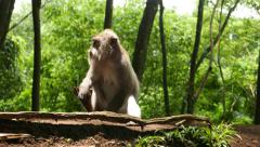 Monkey sit down in bright sunlight, against green blurred background Stock Footage