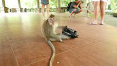 Monkey gnaw and tear black plastic bag, sitting on tiled floor Stock Footage
