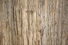 Close up Eucalyptus tree texture rainforest Tasmania - stock photo