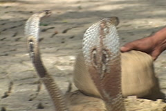 Snake Charmer in KERALA, INDIA Stock Footage