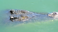Stock Video Footage of Crocodile