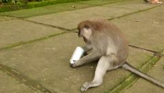 Male monkey with empty tinkling spray can, lie down and holding Stock Footage