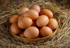 Egg in a basket on the dried grass Stock Photos