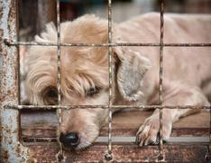 lonely old dog in cage - stock photo