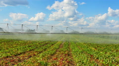 Irrigation fertile field. - stock footage