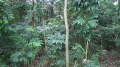 Tree in tropical jungle - stock footage