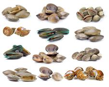enamel venus shell, Clam shellfish, Surf clam, mussel,  spotted babylon on wh - stock photo